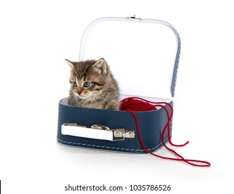 Cute tabby kitten inside of mini suitcase with red yarn isolated on white background