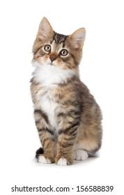 Cute tabby kitten isolated on white.