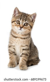 Cute tabby kitten isolated on white background