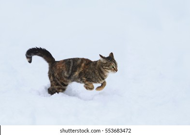 cute tabby kitten jumping on the white snow