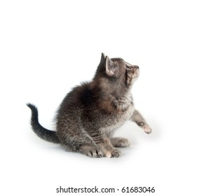 Cute tabby kitten looking up on white background