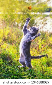 cute tabby kitten on a summer sunny meadow catches a flying orange butterfly jumping in clear weather in the green grass in the garden