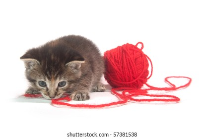 cute tabby kitten playing with red yarn on white background