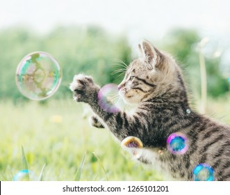 Cute tabby kitten playing with soap bubbles on green meadow outdoor.