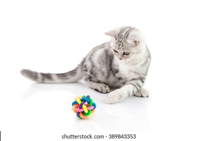 Cute tabby kitten playing toy on white background isolate