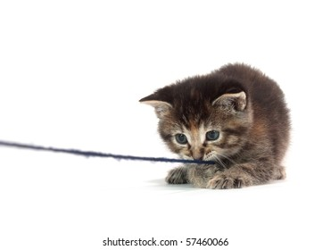 cute tabby kitten plays with blue string of yarn on white background