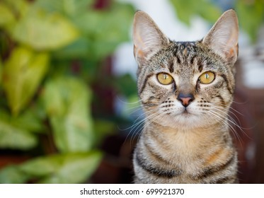 Cute tabby kitten portrait with blurred green leaves background