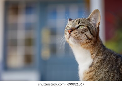 Cute tabby kitten side view outdoors with blurred windows in background