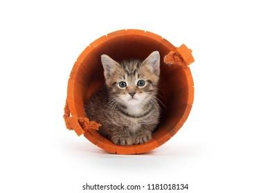 Cute tabby kitten sitting inside of orange wooden bucket isolated on white background