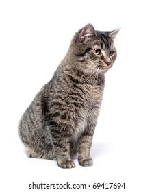 Cute tabby kitten sitting on white background