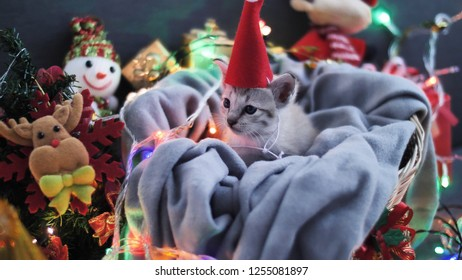 Cute tabby kitten sitting in sheet with Christmas decoration