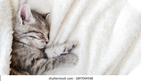 Cute tabby kitten sleeping on white soft blanket. Cat rest napping on bed. Comfortable pet sleeping in cozy home. Top view Long web banner with copy space