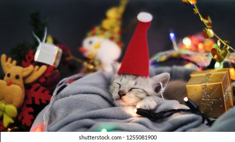 Cute tabby kitten sleeping in sheet with Christmas decoration