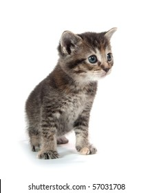 Cute tabby kitten standing on a white background