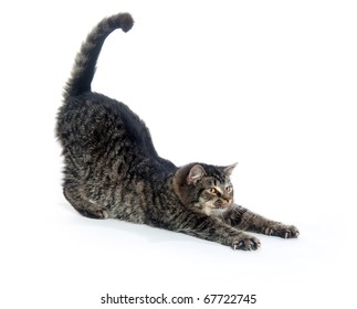 Cute tabby kitten stretching on white background