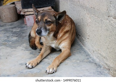 Cute tan and dark brown stray puppy dog lying alone on bare grey concrete floor