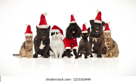 cute team of seven santa pets of different breeds sitting on white background with mouth open and tongue exposed