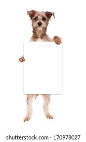 A cute terrier crossbreed dog against standing up and holding a blank white sign for you to enter your marketing message onto