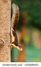 Cute Thai common squirrel perching on a tree trunk
