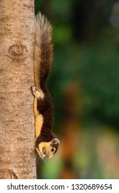 Cute Thai common squirrel perching on a tree trunk with food in hands