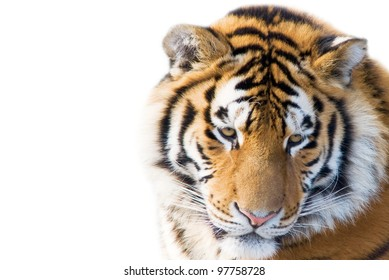 Cute tiger cub - isolated on white background