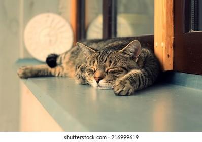 Cute tired cat sleeping