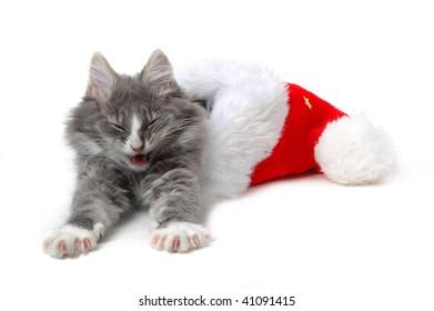 cute tired kitten with christmas bonnet