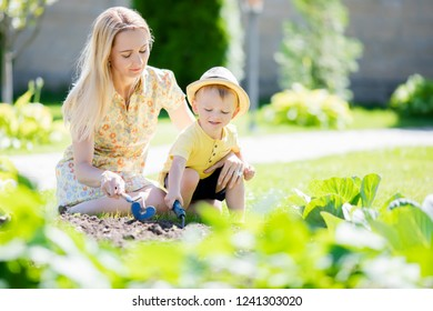 Cute toddler boy working in the gardenwith his mother, harvest of cabbage. Countryside, little farmer.