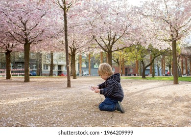 Cute toddler child, boy playing happily in pink blooming sacura garden, springtime