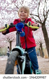 Cute toddler child, boy riding bike in pink blooming sacura garden, playing