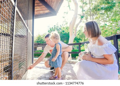 Cute toddler child girl and her parents feeding rabits sitting in cage at the zoo or animal farm. Outdoor fun for kids. Family rest, spending time together concept. Selective focus. Copy space