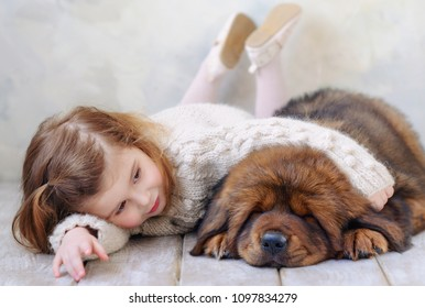 Cute toddler girl lying down on the floor with her new fried fluffy puppy, domestic animals, best friends concept