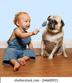 A cute toddler wearing jean overalls tries to share his lollipop with a pug puppy.