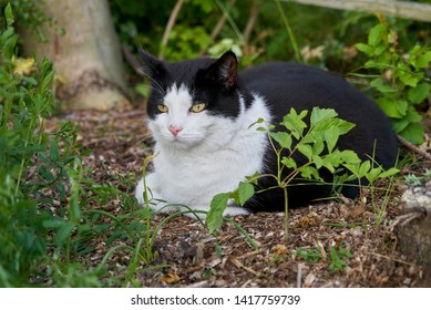 cute tomcat with black and white fur is lying in the garden in a natural bed