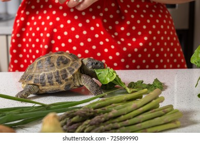 Cute tortoise feasting on salad