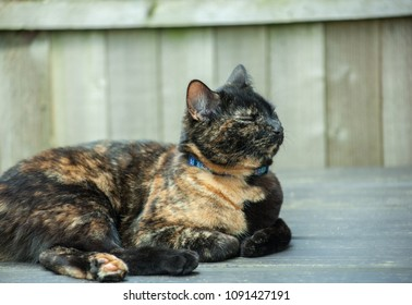 cute tortoiseshell cat enjoying herself outdoors