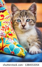 Cute tortoiseshell kitten posing with a colorful pillow (shallow DOF)