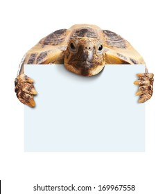 Cute turtle holding  a blank white board isolated on white