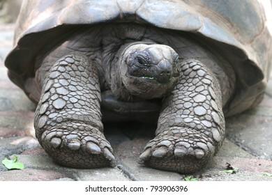 Cute turtle in Prison Island, Tanzania