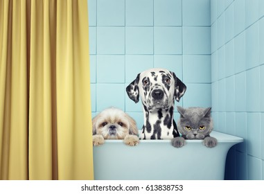 cute two dogs and cat in the bath