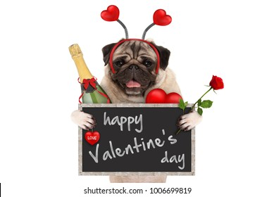 cute valentine's day pug dog with blackboard, champagne, hearts diadem and rose, isolated on white background