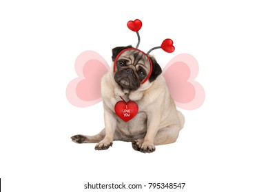 cute Valentine's day pug puppy dog, sitting down, wearing hearts diadem and heart shaped wings, isolated on white background