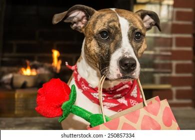 Cute Valentine's Dog