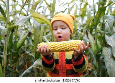 Cute very surprised child in colorful sweater with ripe corn cob on yellow autumn corn field. Fall season concept.