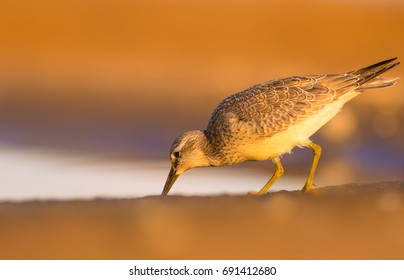 Cute water bird. Yellow nature background.