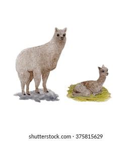 cute watercolor lama alpaca