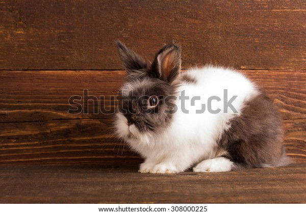cute white and black bunny sitting over wooden background