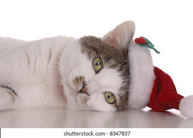 A cute white and brown cat wearing a Santa Claus hat. Picture taken against a white background.