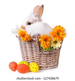 Cute white bunny sitting  in a basket with flowers and colorful easter eggs, isolated on white
