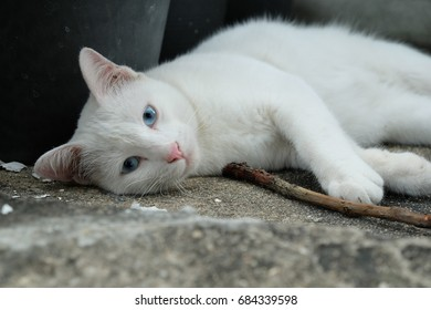 Cute white cat lay down chill out
